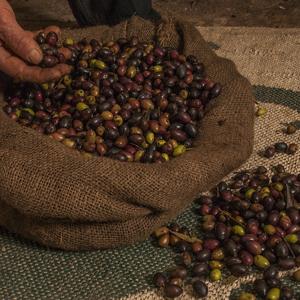 Shoreline Olives